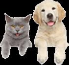 hebrew-pets-img
