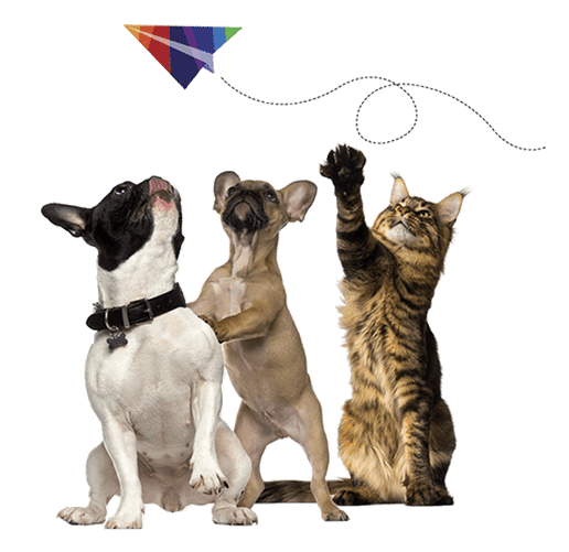 Pet transport service shipping pets worldwide pets2fly image sciox Gallery