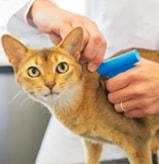 Pet Microchip Needed For South Africa