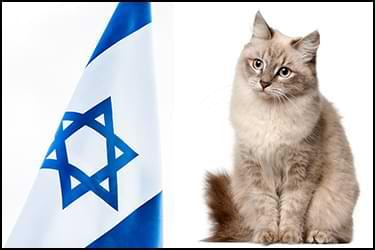 חתול יושב ומסתכל על דגל ישראל