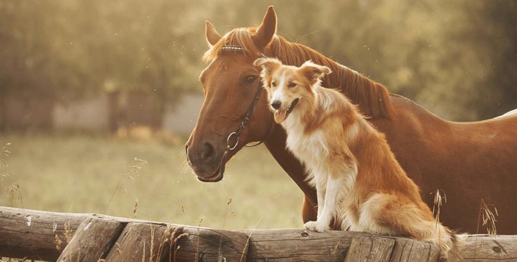 מעולה יבוא בעלי חיים לישראל - דברים שחשוב לדעת - Pets2Fly UZ-37