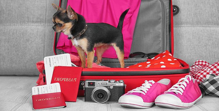 images-דרכון לכלב