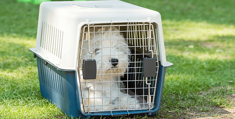 images-כלוב הטסה לכלב – מה צריך לדעת