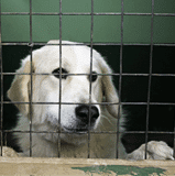 Quarantine For Pets Entering South Africa