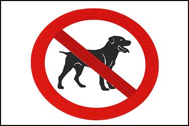 תמרור של מקום שלא מאפשר להכניס כלב