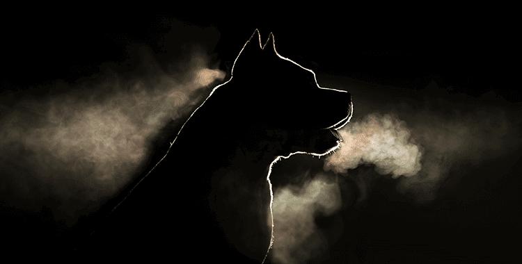 images-הטסת כלב מסוכן