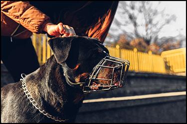 כלב מסוכן עם מחסום