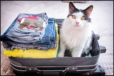 הטסת חתול בבטן המטוס או בתא הנוסעים