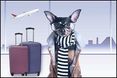 כלב בשדה התעופה עם מזוודות ומטוס בשמיים. הכלב מוכן להטסה