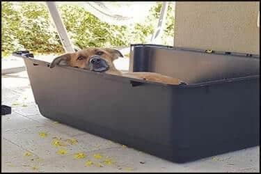 כלב שוכב בתוך כלוב טיסה