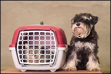 כלב יושב ליד כלוב הטסה ובתוך הכלוב יש חתול