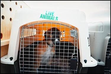 כלב עצוב בתוך כלוב הטסה של פטמייט