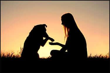 צללים של ילדה וכלב נותנים יד אחד לשניה