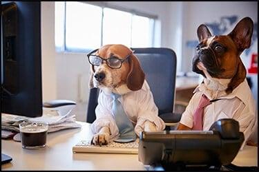 כלב בולדוג צרפתי וכלב ביגל התלבשו כאנשי עסקים ליד שולחן עבודה עם מחשב
