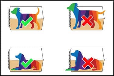 4 dogs painted inside pet flight crates. The picture illustrates the basic requirements for choosing a right sized crate