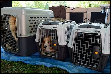Airline Approved Flight Crates For Pets