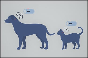 Dog and cat with a pet microchip each and a chip scanner scanning them