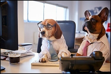 Bulldog and Beagle dressed as businessmen near desk with computer