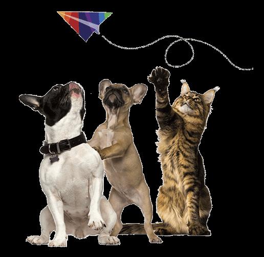חתול ו-2 בולדוגים צרפתיים מסתכלים על מטוס נייר עם הצבעים של הלוגו של פטס2פליי