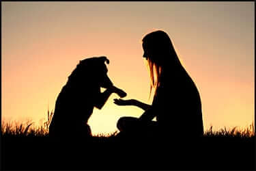 Shadows of a woman and her dog shaking hands