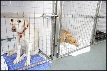 Dogs in quarantine