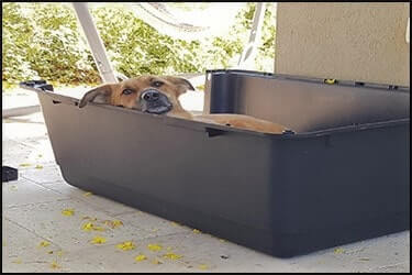 Accustomed dog in a travel crate