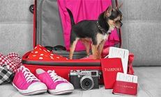 כלב קטן בתוך מזוודה מוכנה לטיול. יש לידו כרטיס טיסה ודרכון