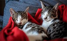 2 חתולים ישנים