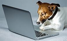 כלב מסתכל בתוך מחשב