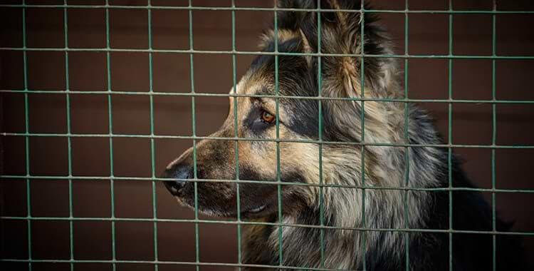 images-כלוב הטסה לכלב גדול