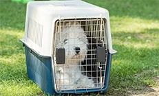 כלב לבן בתוך כלוב הטסה בחצר
