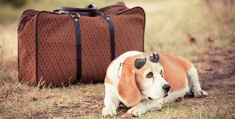 images-כמה עולה להטיס כלב