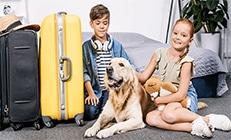 רילוקיישן עם כלב - ילד וילדה יושבים עם הכלב שלהם ליד מזוודות