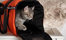 חתול בתוך תיק נשיאה לחתול