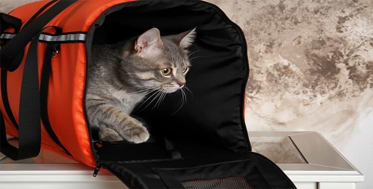 images-תיק נשיאה לחתול