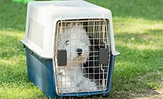 White dog inside an airline approved flight crate