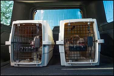 כלבים בכלובי טיסה בתוך רכב