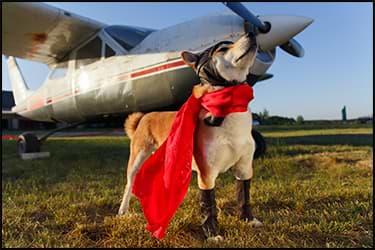 כלב לבוש כמו טייס עם מטוס ברקע