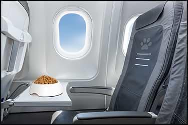 כלי אוכל לכלב בתוך הקבינה של מטוס