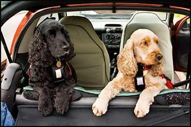 כלבים ברכב