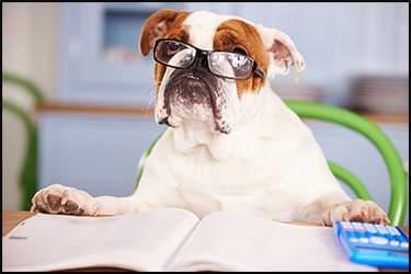 כלב עם משקפיים, מסמכים ומחשבון עושה חישובים