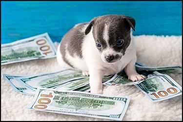 גור כלבים קטן עם דולרים