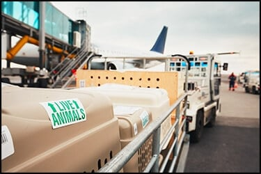 Flight crates on a cart at the airport on their way to the hold of the plane