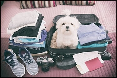 Cute small dog inside his owner's luggage