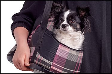 Small dog in a flight carrier for in-cabin pets